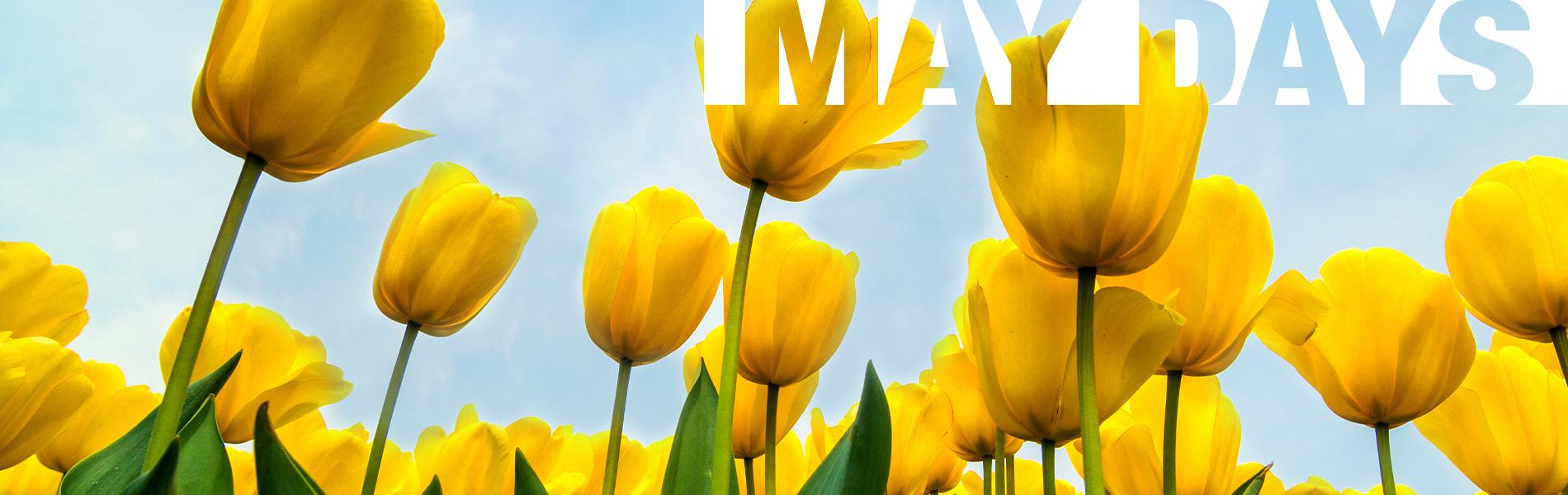 U proleće sve RASTE,samo naše CENE OPADAJU!